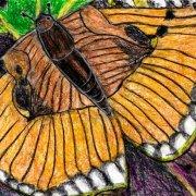 Schmetterling braun